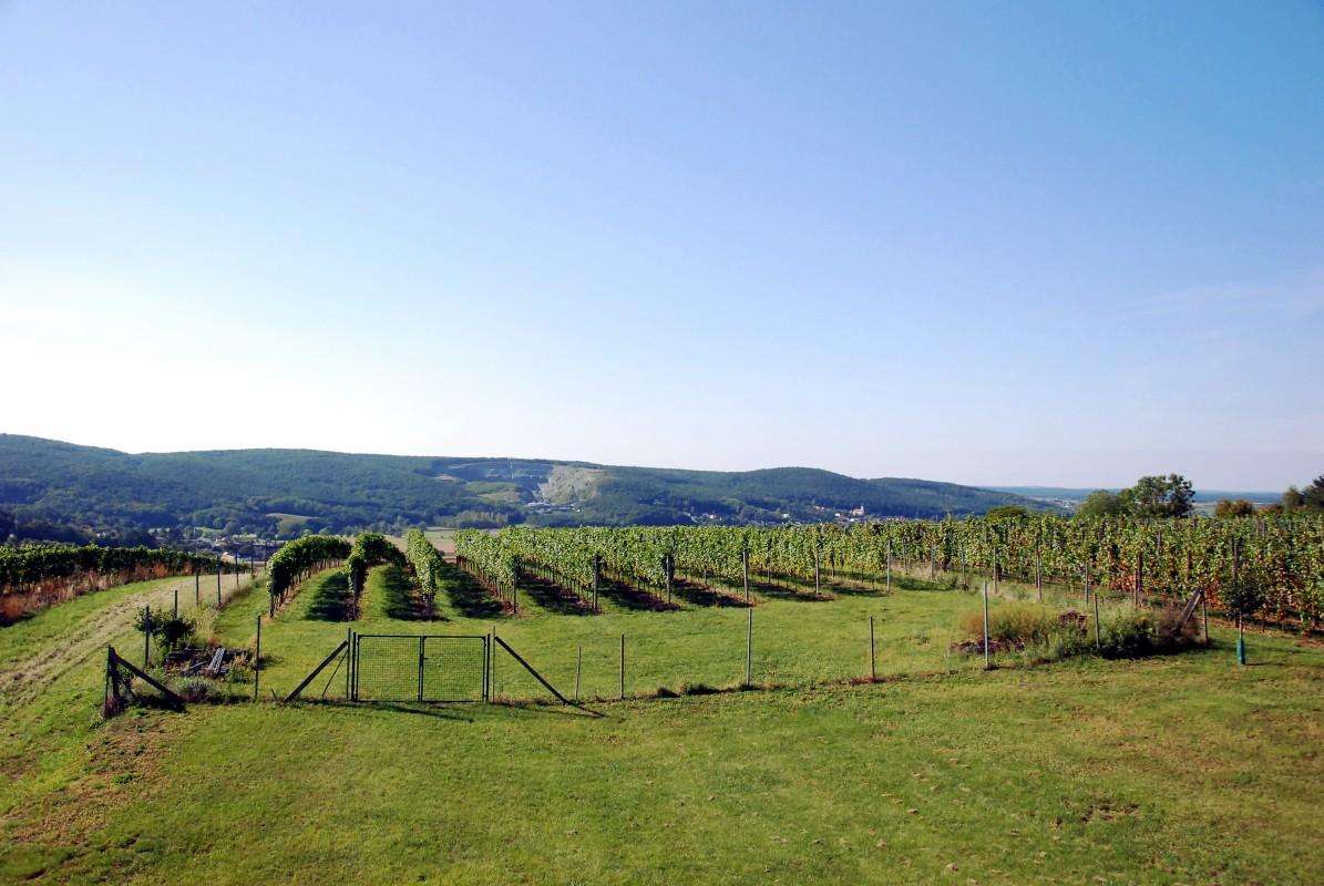 2005 – Neuanlage des Weingartens
